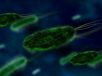 health bacteria