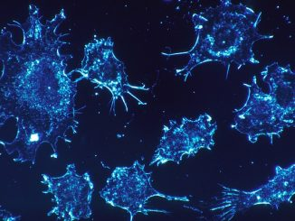 health cancer cells