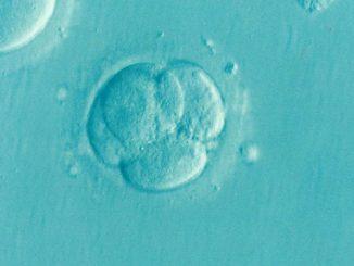 health embryo
