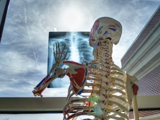 health human skeleton