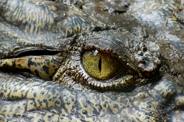 Crocodile Gene Editing